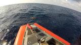 Photos: Coast Guard rescued sea turtles - (3/4)
