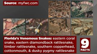Video: 9 facts about Florida snakes
