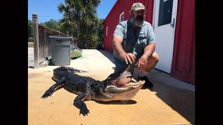 9 Facts about alligators