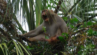 Monkey sightings raise safety concerns for some Apopka residents