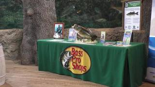 FWC Releases Tagged Bass at Bass Pro Shops