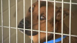 Dog flu breaks out at Pet Alliance of Greater Orlando