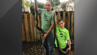 8-year-old Florida boy catches 6-foot-long python