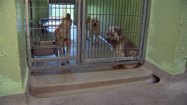 El refugio tiene como objetivo mantener a los animales fresco en medio de los días más calurosos del verano - WFTV Orlando 4