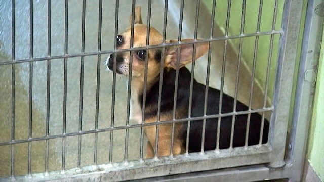 El refugio tiene como objetivo mantener a los animales fresco en medio de los días más calurosos del verano - WFTV Orlando 1