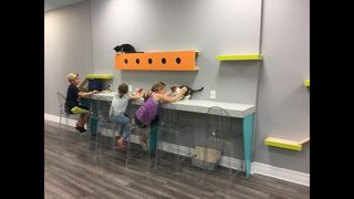 Cat café opens in Volusia County