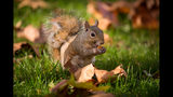 Man firing at squirrel puts school on lockdown, Cocoa police say