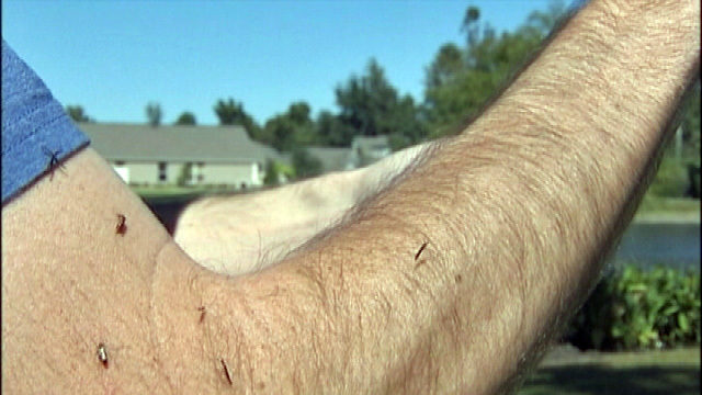 Mosquitoes in Festus, Imperial, Arnold test positive for West Nile