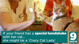 9 Facts: Is your friend a crazy cat lady
