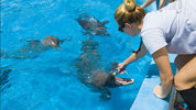 Atlantic Bottlenose dolphins from Duck Key to Orlando moved to SeaWorld.
