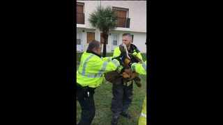 Injured pelican rescued by Daytona law officials