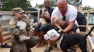 Video: National Guard rescues dogs in Orlo Vista after Hurricane Irma