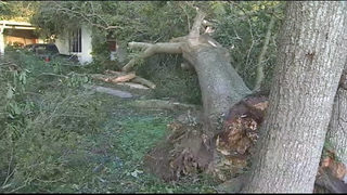 VIDEO: Seminole County residents continue to clean up after Irma
