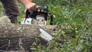 VIDEO: Hurricane Irma: Tree debris removal begins in Orange County