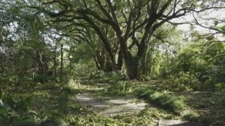 Video: Orlando plans to replant fallen trees, but cleanup comes first