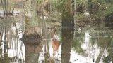 Video: Floodwaters not receding in Merritt Island neighborhood, residents say