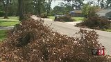 VIDEO: Orange County hurricane debris removal: When yours will be picked up