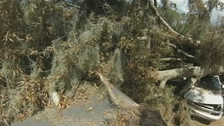 Video: Groveland family received unexpected help with massive tree removal