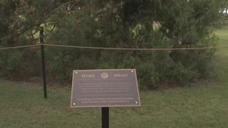 Winter Park retires decades-old Christmas tree