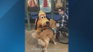 Watch: Service dog, Pluto have magical meeting at Walt Disney World