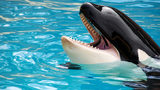 Video: SeaWorld CEO Joel Manby departs as company's losses widen