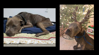 Edgewater woman gets 120 days in prison for starving dog to death
