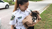 A 3-month-old puppy was rescued from a storm drain Tuesday by two Hillsborough County Sheriff's Office deputies.