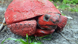 Tortoise covered with paint, concrete discovered in Lake County