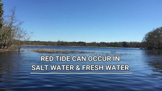 Red tide: a common (and possible fatal) occurrence in Florida