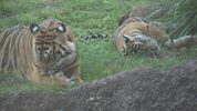Animal Kingdom save the animals