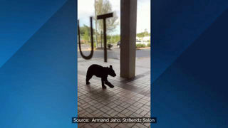 Watch: Young bear runs through Altamonte Springs strip mall