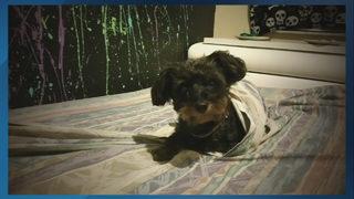 9 Investigates: Questionable dog rescue