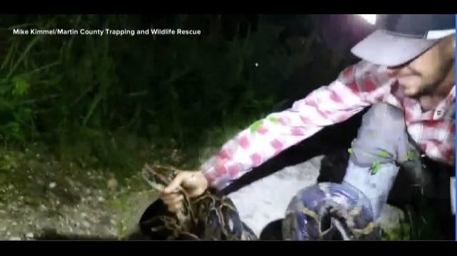 PYTHON EVERGLADES: Man rescues gator from python | WFTV | WFTV