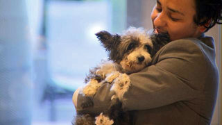 Spread Love and Kindness: Orlando hotel connects guests with dogs in need of adoption