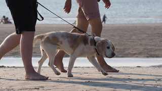 Dogs allowed on Cocoa Beach... for now