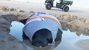 Beachgoers were trying to keep the manatee wet while waiting for rescuers.