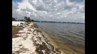 Video: Red tide continues to be a big problem along Florida