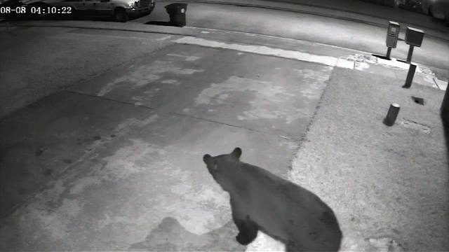 BEARS IN OVIEDO: Mother bear and her cubs eat trash Seminole