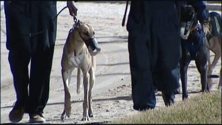9 Investigates: Greyhounds testing positive for prohibited drugs