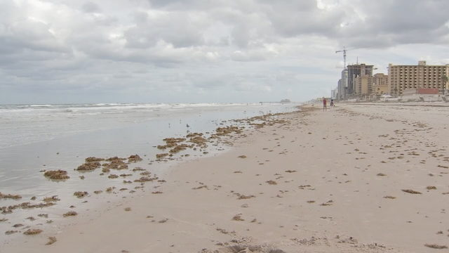 Low Levels Of Red Tide Found In Indian River Lagoon System