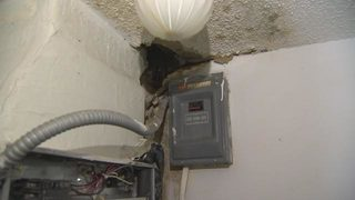 Mold mess: Woman missing part of brain asks for compassion from condo association