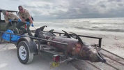 Seven Dolphins were found dead Tuesday on the shore in Bonita Springs, and red tide is the suspected killer.