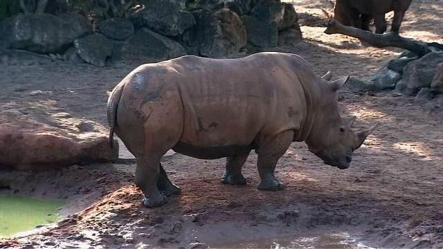 KID FALLS INTO RHINO EXHIBIT: 2-year-old girl hurt at Brevard Zoo