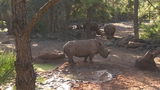 VIDEO: Brevard Zoo: Rhinos will not be 'punished' after 2-year-old girl stumbles into exhibit