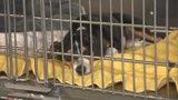 Video: Volusia County animal abuse registry