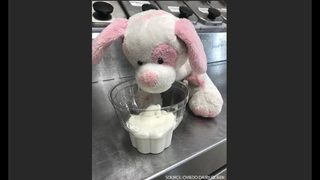 Stuffed puppy left at Oviedo ice cream shop; workers use social media to help find its owner