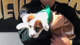 Puppy found tied in sheet, dumped at intersection in Melbourne