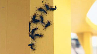 The bugs Floridians love to hate are back and they could