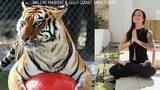 The Big Cat Habitat & Gulf Coast Sanctuary in Sarasota has a unique yoga program amid the enclosures housing some of its 50 big cats.