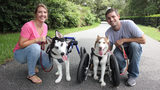 Video: 'Handicapable' huskies take a walk